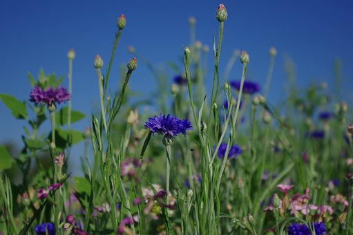 flower-meadow-2484497__340